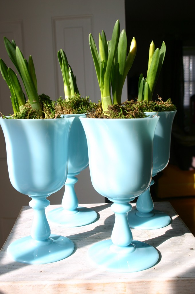 Daffodils separated out and planted in individual vessels makes for more bang for the buck.