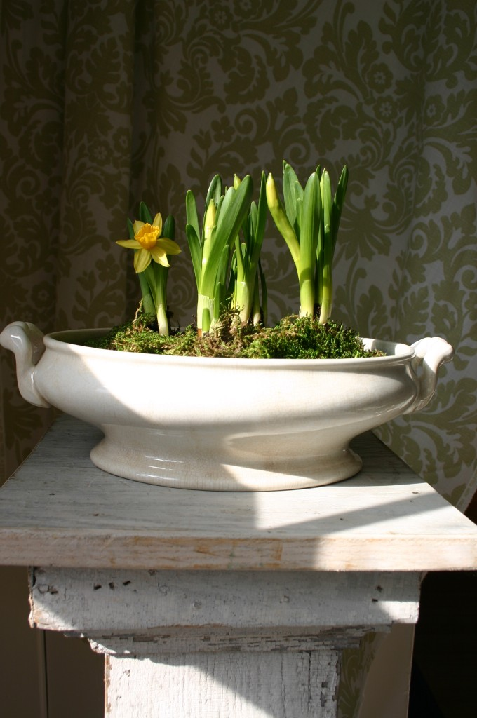 An old gravy boat is given a fresh look once filled with life.