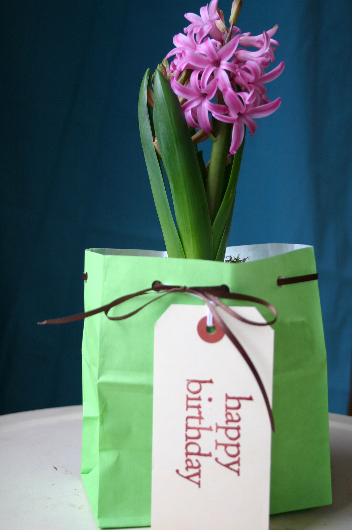 A Hyacinth plant makes a charming gift once given a few extra touches.