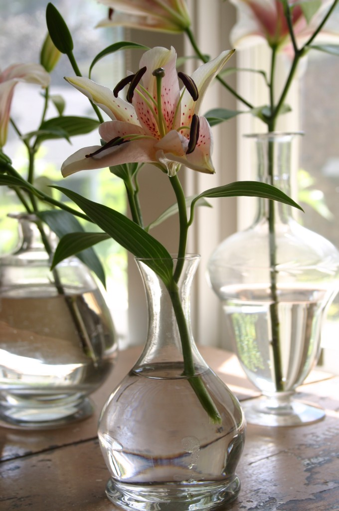 A collection of glass carafes hold a single bloom.