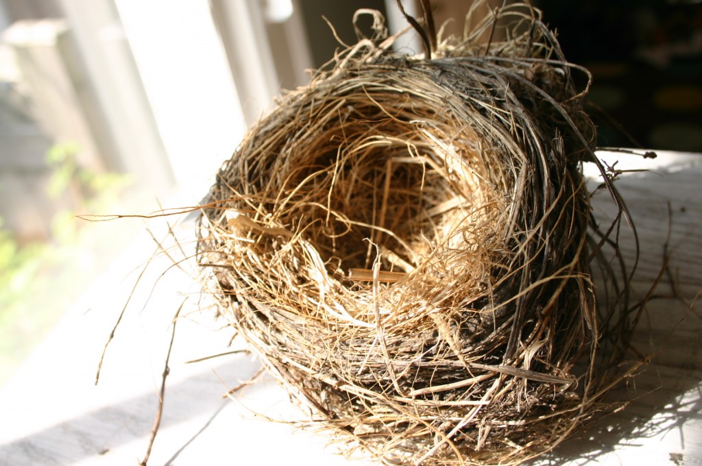 We found this Robin's nest on the ground; children marvel at the work involved in making it. It is a true work of art.