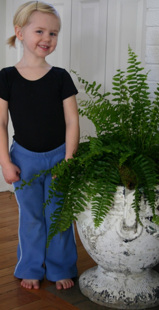 Boston Ferns are available in supermarkets and home improvement stores and for under $10.00 each.