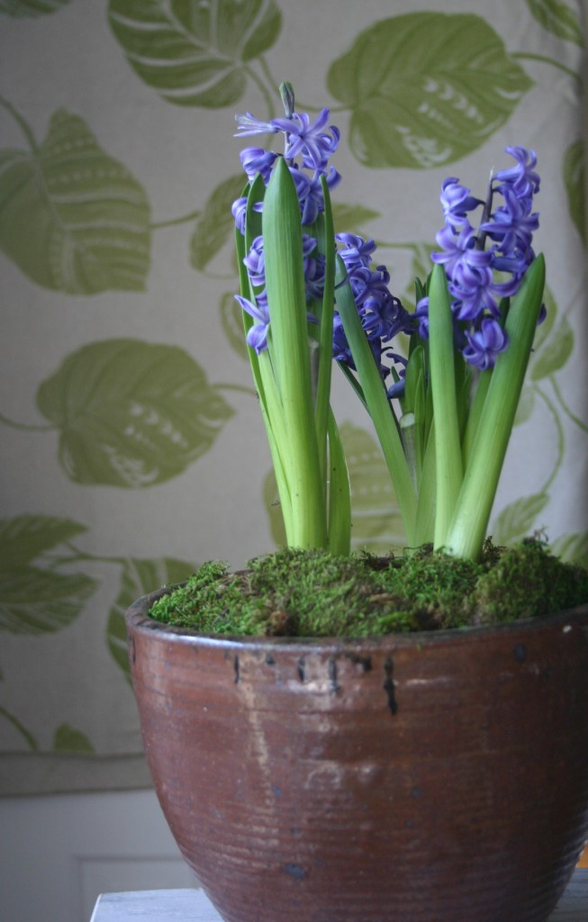 Keep a bit of natural beauty by your bedside - you will notice a difference in your mood. I picked up these lavender hyacinths at my supermarket for about $5.00 and placed them inside of one of my favorite pots - a pleasant reminder that Winter will be over soon!