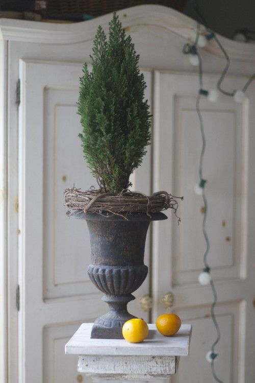 The rim of this potted pine was sticking up above the top of my urn, so I covered it up with a wreath.